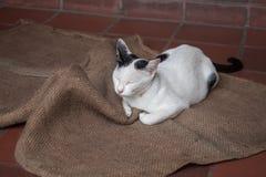 Un chat heureux Photographie stock libre de droits