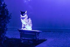 Un chat intéressant restant sur la lampe au néon bleue photos stock