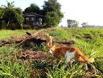 Un chat marchant dans le domaine Image stock