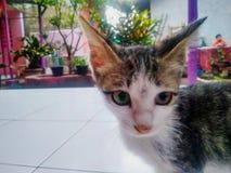 Un chat mignon image libre de droits