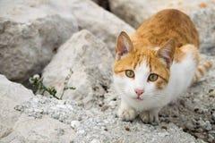 Un chat mignon de gingembre Photos stock