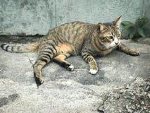 Un chat mignon se repose sur le plancher images libres de droits