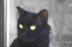 Un chat noir Photo libre de droits