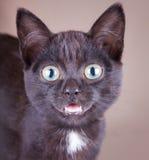 Un chat noir enthousiaste avec une bouche ouverte Photo libre de droits