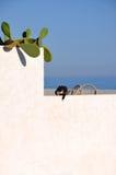 Un chat noir et blanc Photos libres de droits