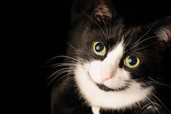 Un chat noir et blanc avec un regard adorable avec du charme et des yeux verts se trouve sur une chaise Le concept des animaux fa Image libre de droits