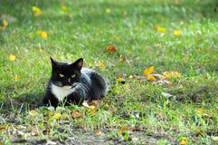 Un chat noir et blanc calme Photos libres de droits