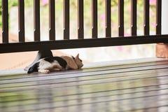 Un chat noir et blanc dormant sur le balcon photographie stock