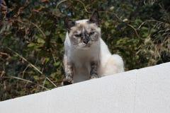 Un chat noir et blanc sans abri images stock