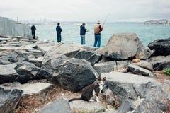 Un chat noir et blanc se repose sur les pierres près des pêcheurs sur le bord de la mer Photos stock