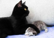 Un chat noir et un chaton vilain Photo stock