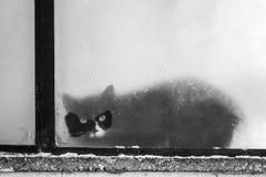 Un chat noir regarde par l'espace de fenêtre Photographie stock