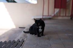 Un chat noir sans abri errent autour de la rue Photos libres de droits