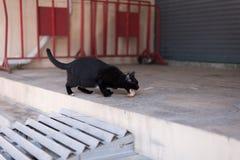 Un chat noir sans abri errent autour de la rue Photographie stock