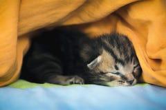 Un chat nouveau-né de lait photographie stock libre de droits