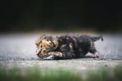 Un chat nouveau-né de lait image stock