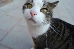 un chat que j'ai trouvé que quelque part il était vraiment doux et Images libres de droits