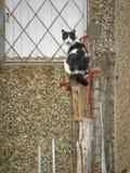 Un chat repéré sur le tronc image stock