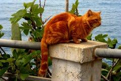Un chat rouge sur la colonne photos stock