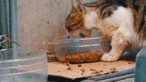 Un chat sans abri égaré mange des aliments pour chats secs dans la fin en plastique spéciale de cuvette vers le haut de la vue banque de vidéos