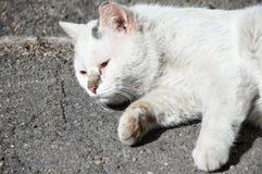 Un chat sans abri malade de rue se trouve sur la rue Image stock