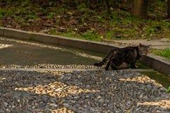Un chat sauvage dans les silvestris de parc-Felis Images stock