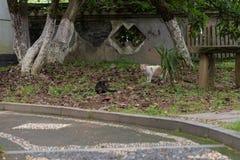 Un chat sauvage dans les silvestris de parc-Felis Image libre de droits