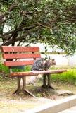 Un chat sauvage dans les silvestris de parc-Felis Photos stock