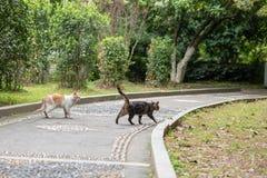 Un chat sauvage dans les silvestris de parc-Felis Photographie stock