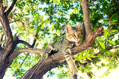 Un chat se reposant sur un arbre Image libre de droits