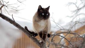 Un chat se reposant sur un arbre banque de vidéos