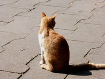 Un chat seul Photos libres de droits