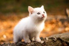 Un chat seul se repose dans la forêt et examine tristement la distance Promenades de chat dans la forêt photo libre de droits