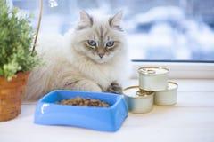 Un chat sibérien sur un filon-couche de fenêtre Images libres de droits