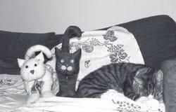 Un chat sur le sofa près de deux chats de tissu images stock