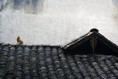 Un chat sur le toit Photo stock