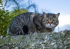 Un chat sur une barrière en pierre photographie stock libre de droits
