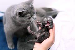 Un chaton d'un jour mignon Photographie stock