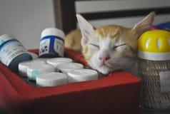 Un chaton dans un sommeil profond images stock