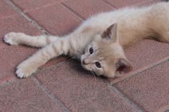 Un chaton dans une pose chaton en plastique Le chaton peut poser Photos stock