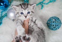 Un chaton est dans la main du ` s de personne Chaton Images libres de droits