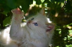 Un chaton touchant une feuille Image stock