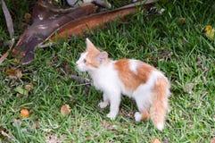 Un chaton très maigre sur une pelouse image libre de droits
