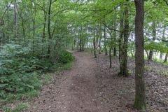 """Un chemin à travers la forêt a appelé """"les contrebandiers itinéraire """"près de Strijbeek, Pays-Bas photos stock"""