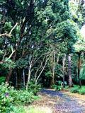 Un chemin à travers la forêt, Mauritius Island photos stock