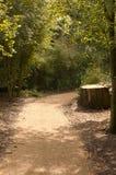 Un chemin à travers les arbres 1 Images libres de droits