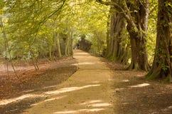 Un chemin à travers les arbres 2 Images stock