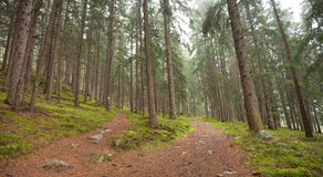 Un chemin alpin simple se dédouble dans deux directions différentes Il ` s Photographie stock