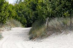Un chemin arénacé à travers la dune image libre de droits