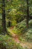 Un chemin caché dans le bois Photos stock